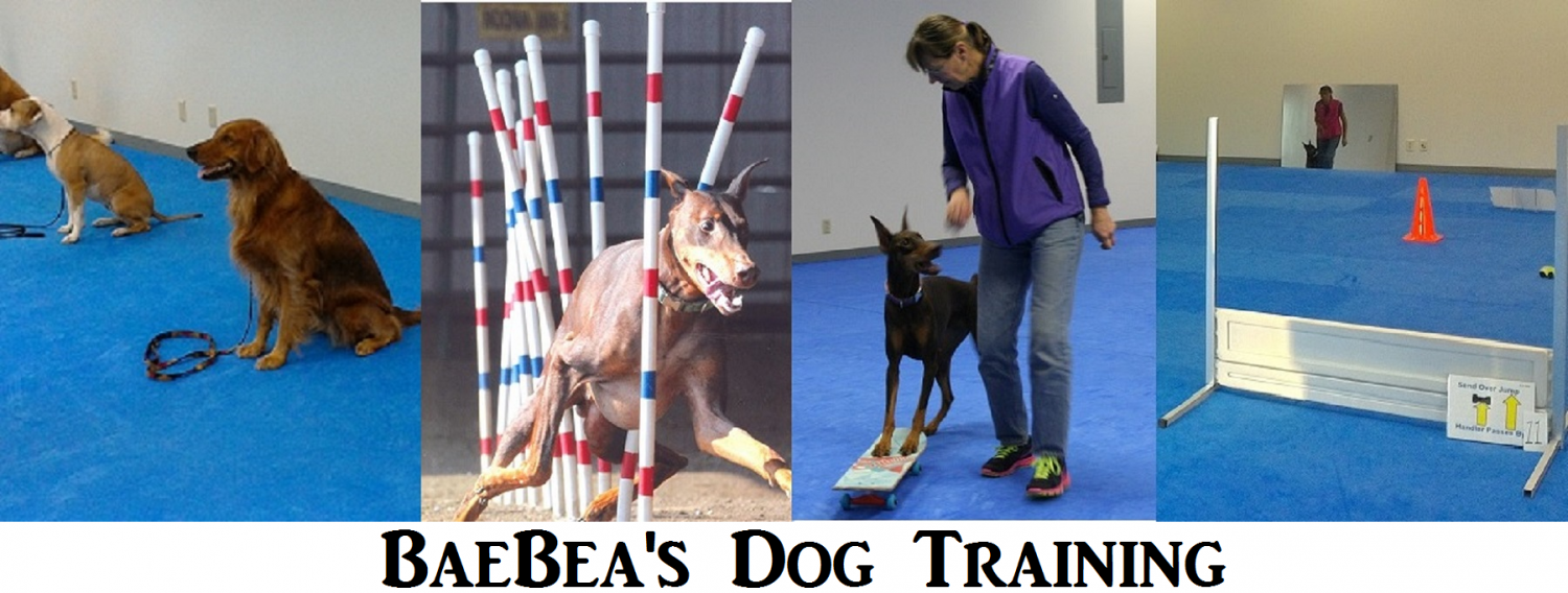 BaeBea's Dog Training